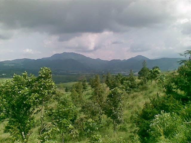 Foto(5379) Jual Tanah Murah Luas 130 Ha, Harga 50.000 Di Puncak Jual tanah di cipanas jual tanah di puncak