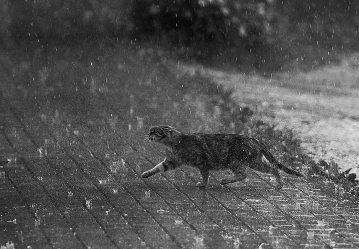 the pet within the actual rain