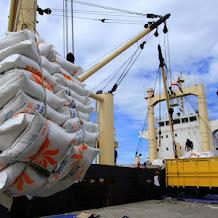 Menjelang panen raya, pemerintah justru mengimpor beras. 500 ribu ton dengan alasan klasik