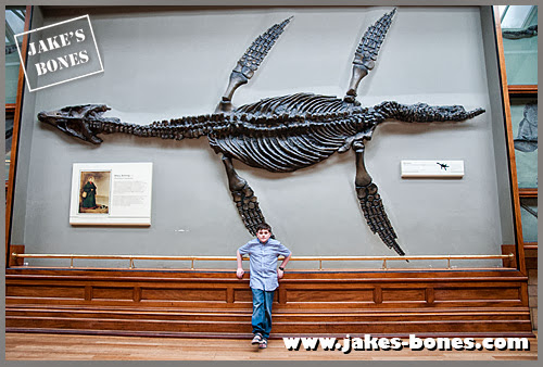 21 ways how I would create an amazing museum         : Jake's Bones