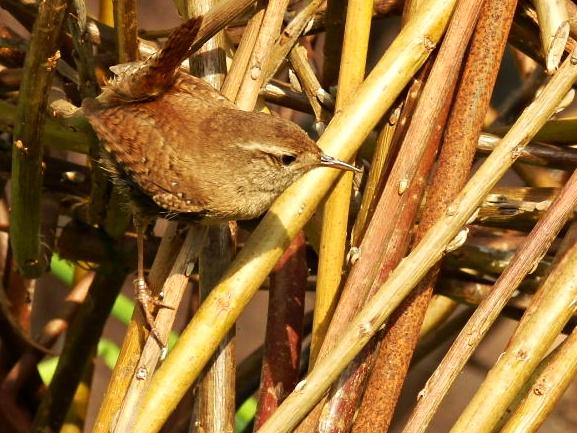 Bird in Mediterranean biome, Eden Project, Cornwall