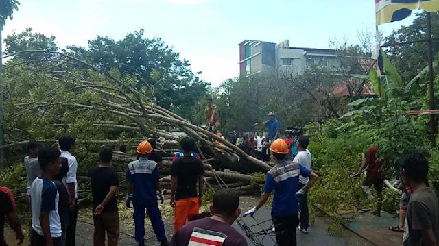 Pohon Besar di Kelurahan Madukelleng Tumbang, Arus Lalulintas Macet