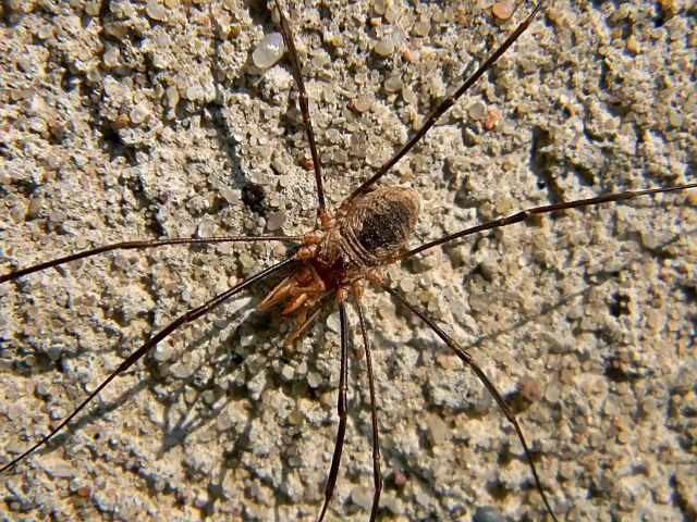 pajęczaki, na ścianie budynku