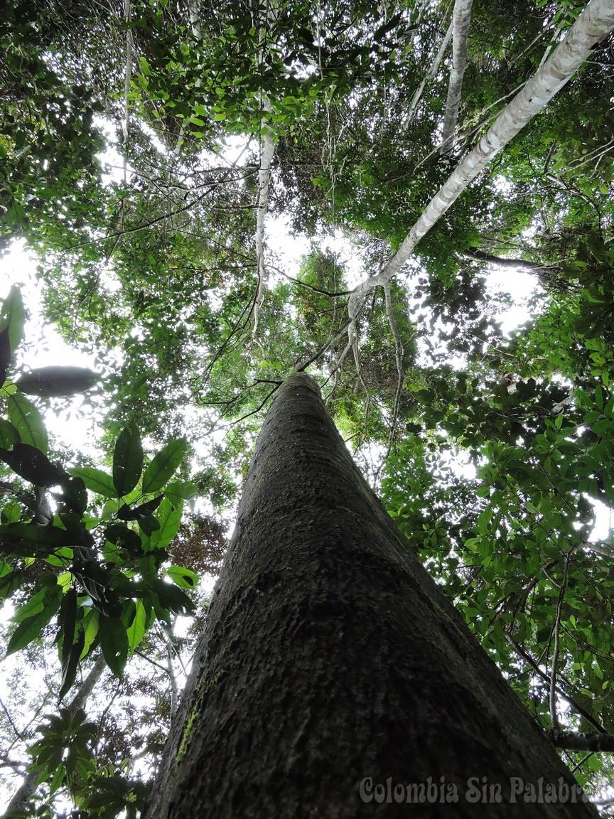 Árbol en medio del bosque alto montañas antioqueñas