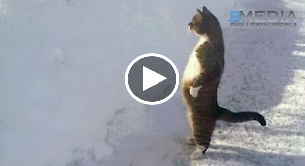 Kucing membuat GAYA MANUSIA,kela kuannya SANGAT MELUCUKAN
