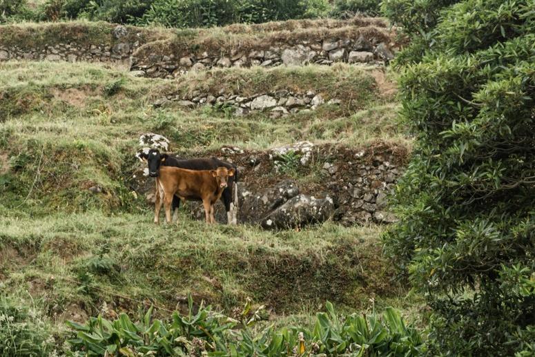 wyspa Sao Miguel Nordeste