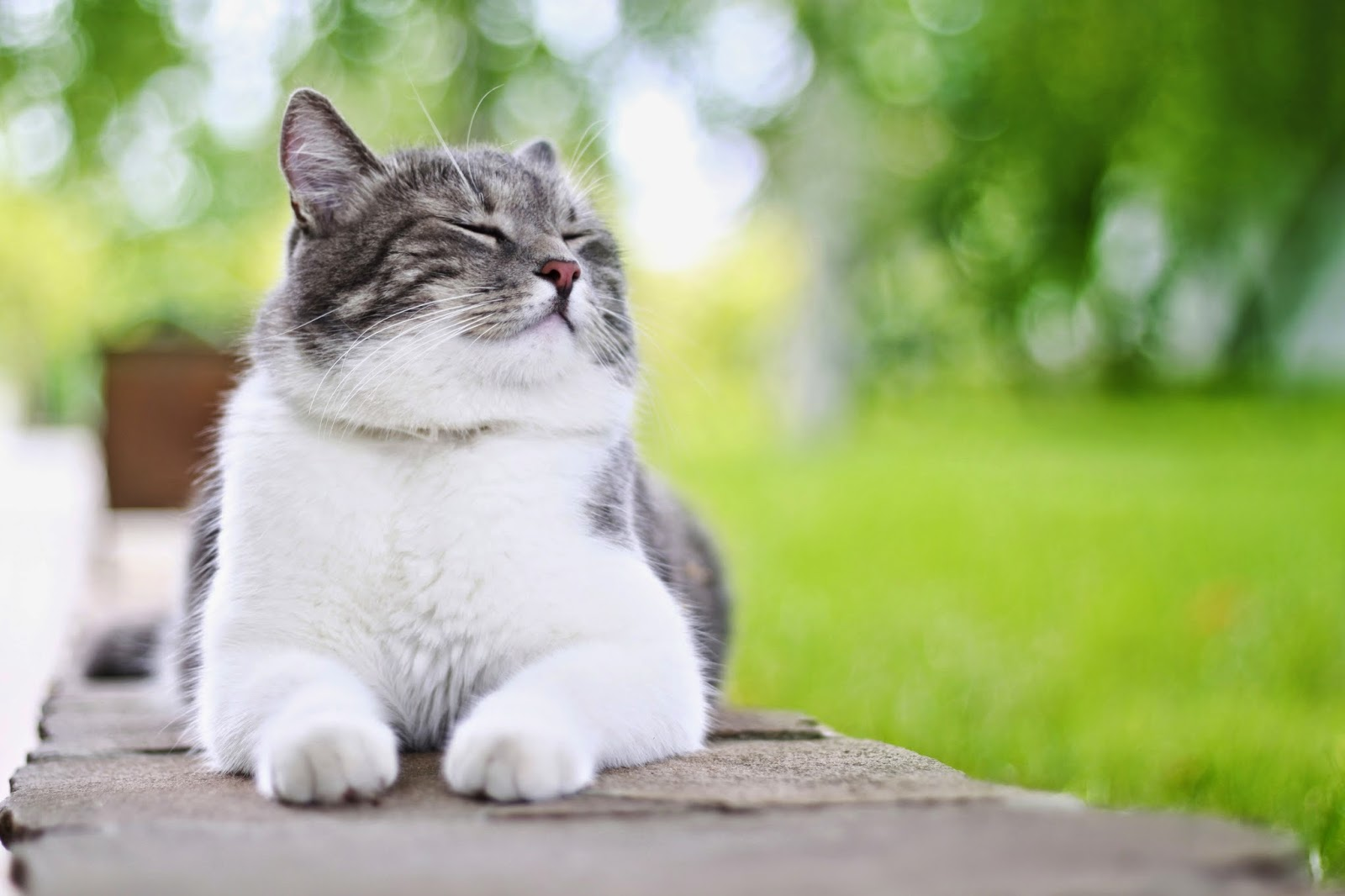 Bregman Veterinary Group: Celebrate Happy Cat Month!