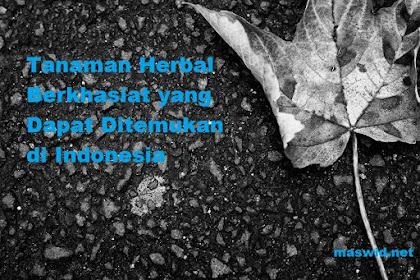 Tanaman Herbal Berkhasiat yang Dapat Ditemukan di Indonesia
