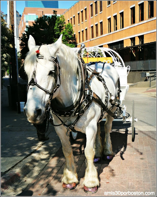 Caballos en Dallas, Texas