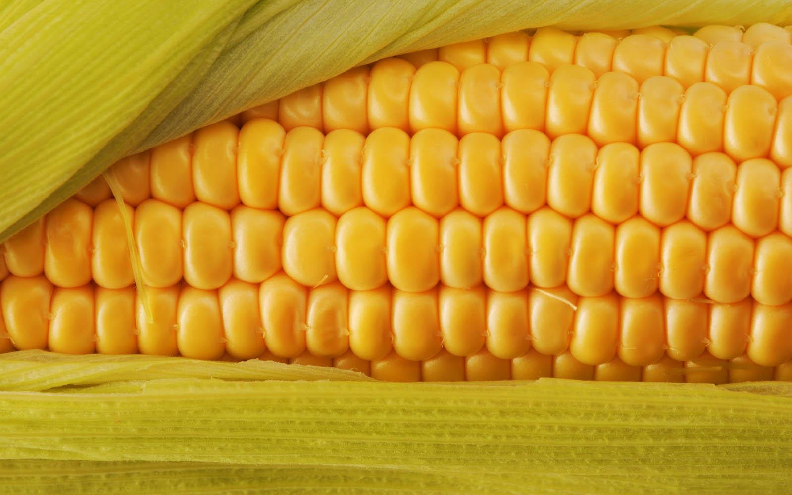 Sweet Home 3d Wallpaper Free Download Wallpapers Fresh Corn