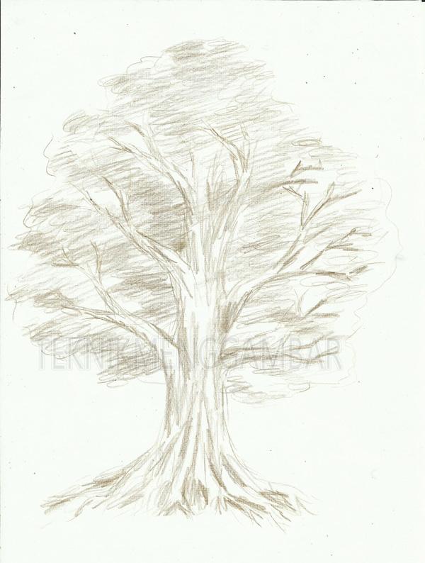 Cara Menggambar Pohon Dengan Pensil Warna