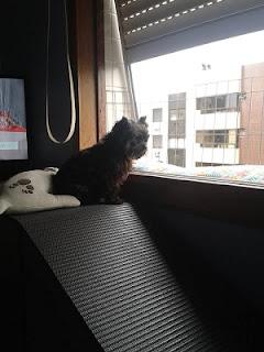 cães visualizando a rua
