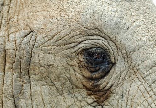 Resultado de imagem para elefante raju