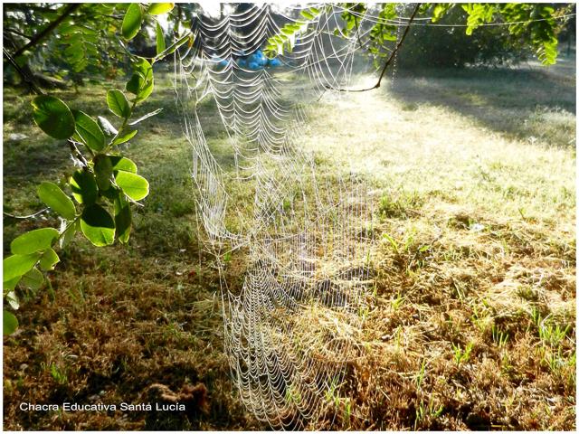 En las mañanas de rocío las telas de araña brillan - Chacra Educativa Santa Lucía