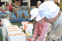 あんぽ柿 ジューシーで食物繊維が豊富な干し柿