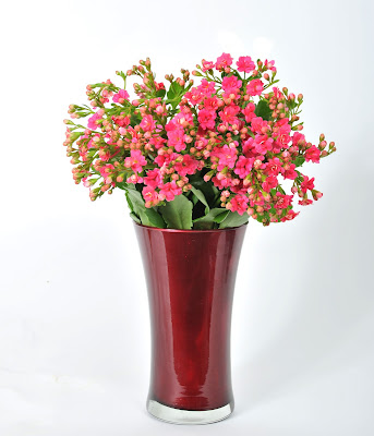 find kalanchoe cut flowers