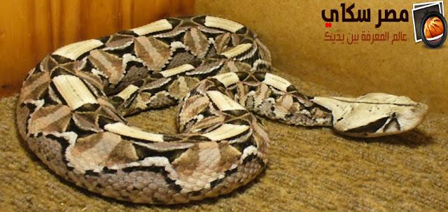 أهم أنواع الثعابين المتواجدة فى حدائق الحيوان Types of snakes