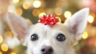 buy pet products, pet gifts, gift for pets