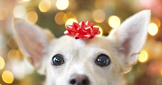 Shopping for the Holiday Season? Don't Forget About Your Pets