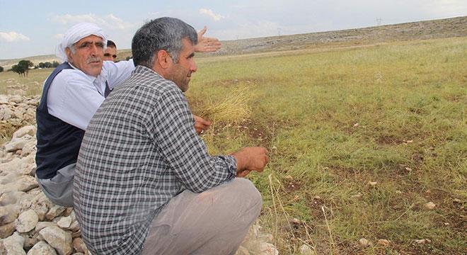 Diyarbakır Ergani'de 10 dakika yağan dolu ekini heba etti