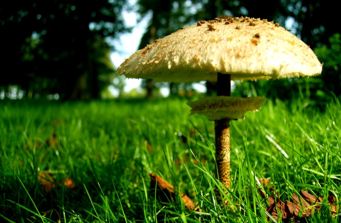cool Mushroom Image For Free  Wallpapers