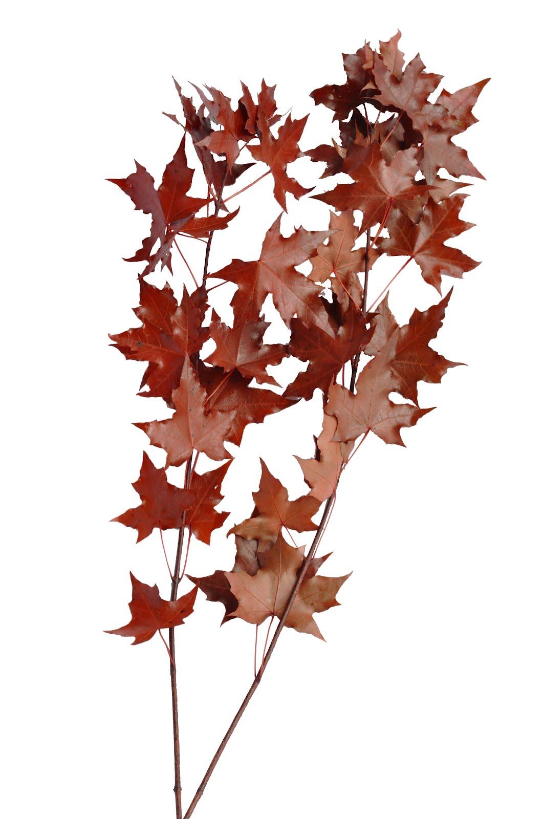 東波水月花坊: AB11008 不凋花葉材 紅楓葉