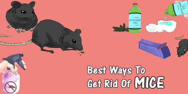 Simple And Easy Ways To Get Rid Of Mice Naturally