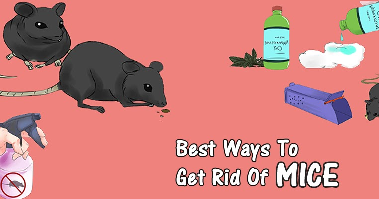 Simple And Easy Ways To Get Rid Of Mice Naturally - Style Hunt World