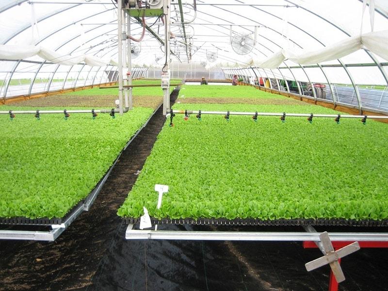 ปลูกผักออร์แกนิค อาชีพเสริมเกษตร