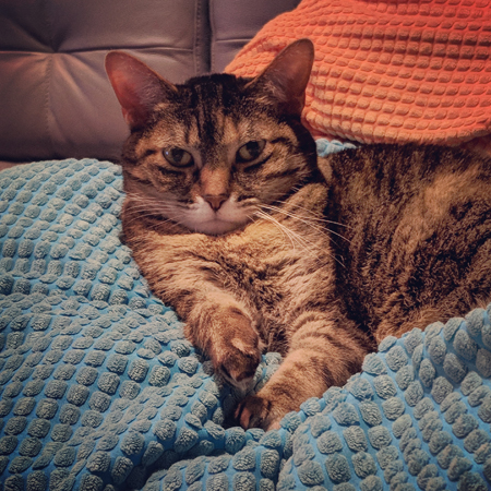 image of Sophie the Torbie Cat sitting on a pillow on the couch, looking totally over it