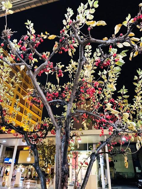 青森行道樹-蘋果