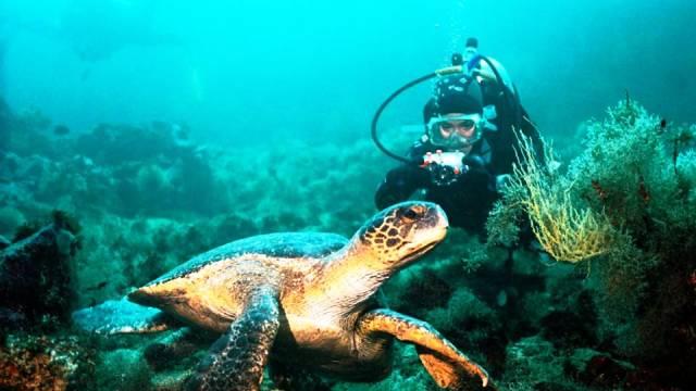 ท่องเที่ยว, แนวหินปะการัง, มัลดีฟส์, สถานที่ดำน้ำ, สถานดำน้ำทั่วโลก, อันดับสถานที่ดำน้ำ, หมู่เกาะกาลาปาโกส เอกวาดอร์ (Galapagos Islands, Ecuador)