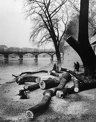 http://undr.tumblr.com/post/154775935922/andr%C3%A9-kert%C3%A9sz-paris-the-tree-1963