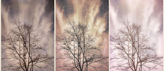 Winter Solstice Triptych