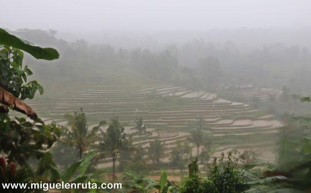Tormenta-Jatiluwih-Bali-Indonesia