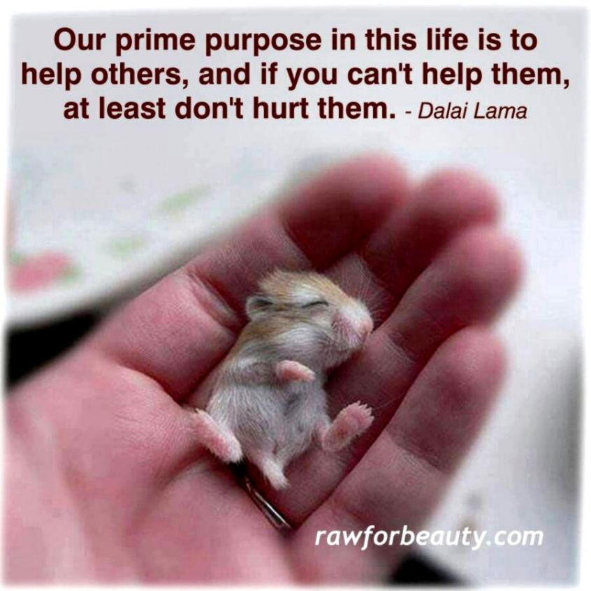 Dalai Lama Quotes Animals With Pictures Wallpapers Glitter