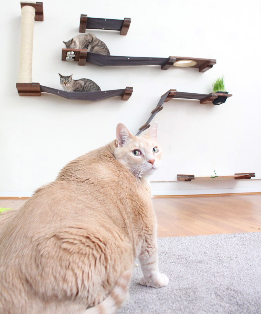 A Couple Adopted This Adorable 33-Pound Cat And Began His Weight Loss Journey