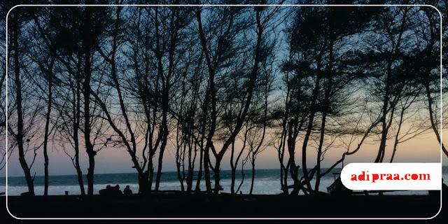 Pohon Cemara Udang di Pantai Baru | adipraa.com