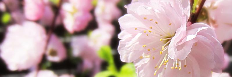 Fit in den Frühling mit Gillette