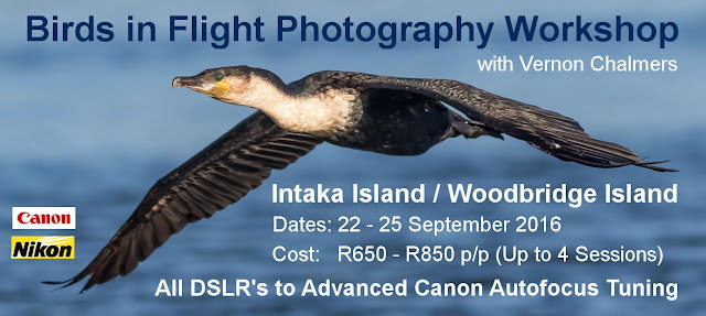 Birds in Flight Photography Workshop Cape Town - September 2016