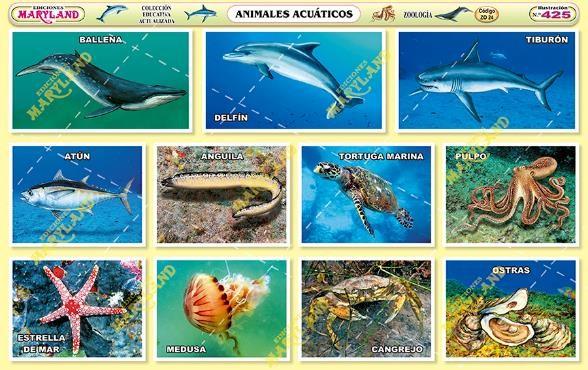 Imagenes Animales Acuaticos
