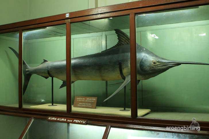 janggilus museum zoologi bogor