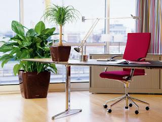 Una planta sana, muestra fuerza y atención en los detalles