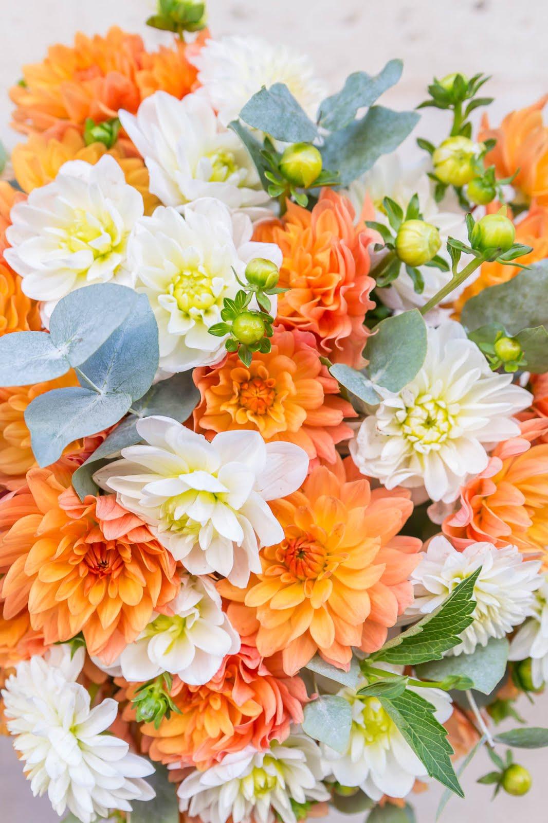 Dahlia oranges