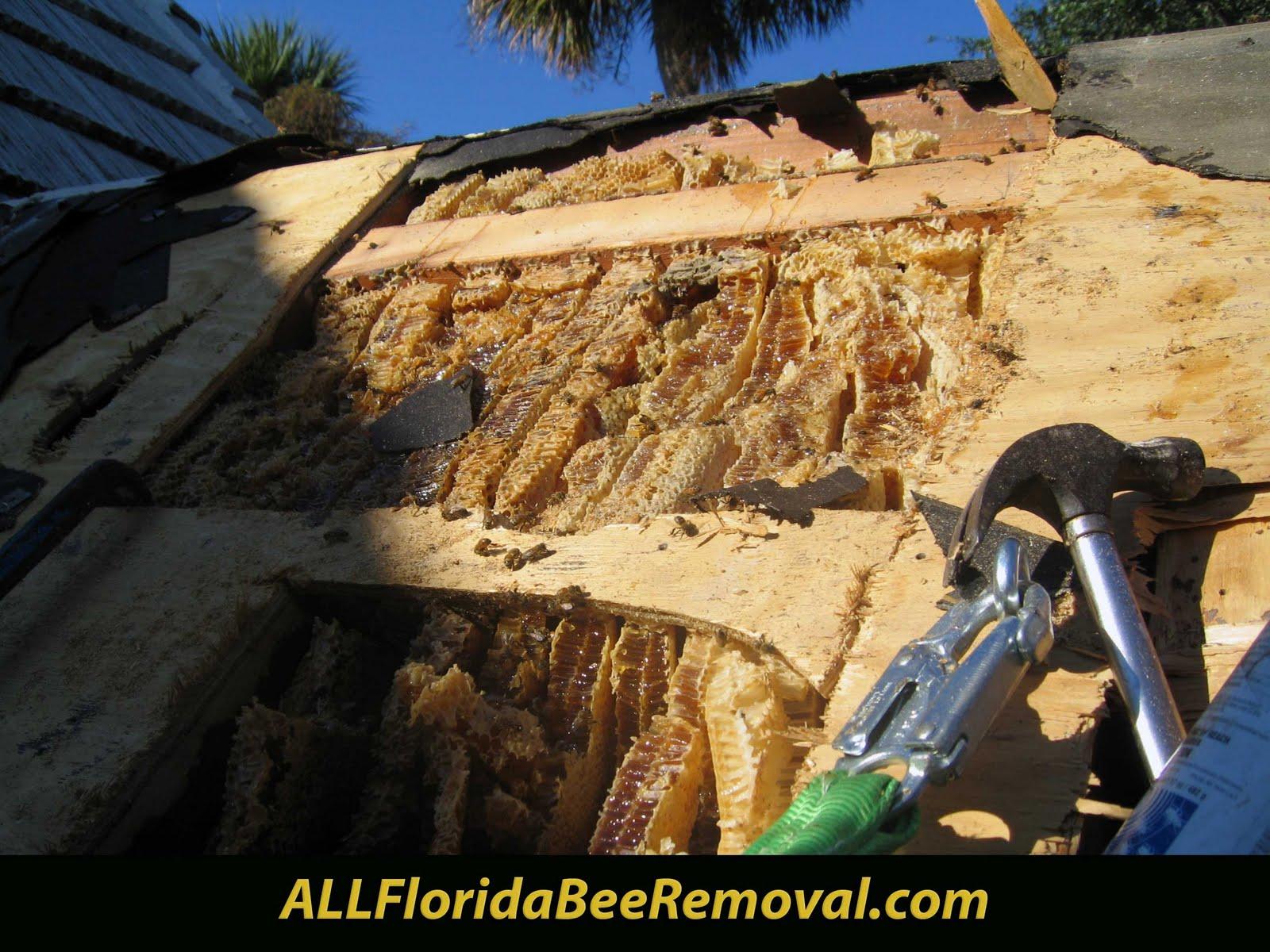 All Florida Bee Removal Blog