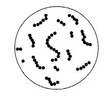 Infeksi Streptococcus sp. pada Hewan