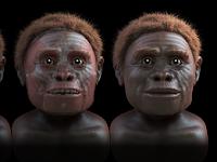 Homo Floresiensis, Ciri - Ciri dan Sejarahnya
