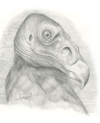 """Pretty Bird - Pencil Study"" - Copyright 2017 - Jephyr - All Rights Reserved"