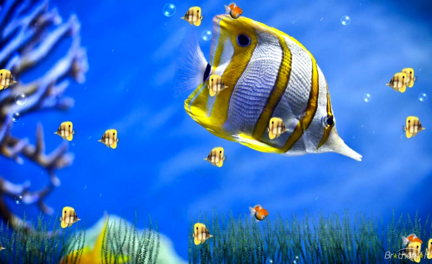 Download Free Marine Life Aquarium Animated Wallpaper Marine Life