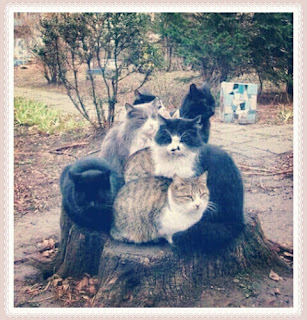 Funny Animal Photos On Whatsapp Groups